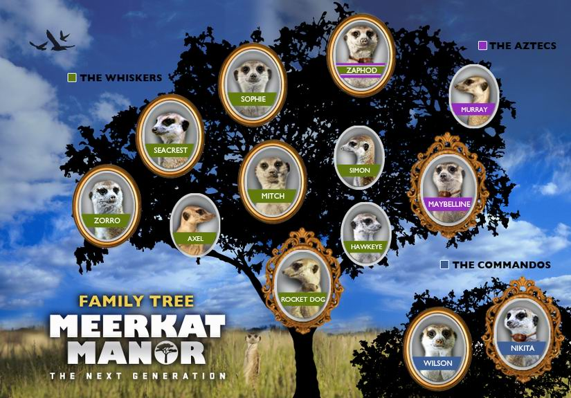 meerkat-manor-family.jpg